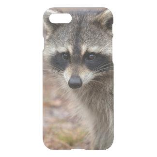 Raccoon, Procyon lotor, Florida, USA 3 iPhone 7 Case