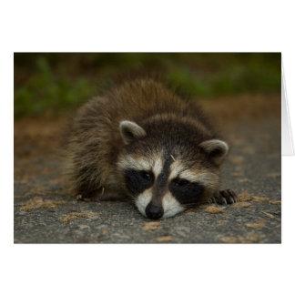 Raccoon - Procyon lotor Greeting Card