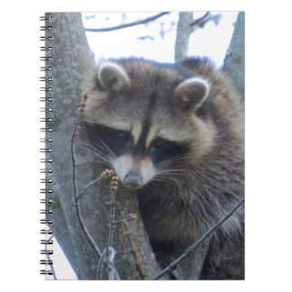 Raccoon Spiral Note Books