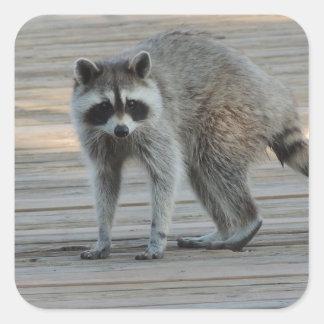 Raccoon Square Sticker