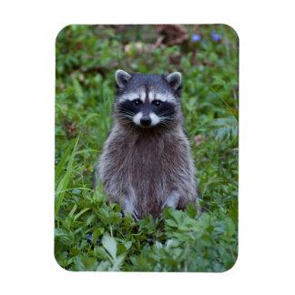 Raccoon Standing Magnet