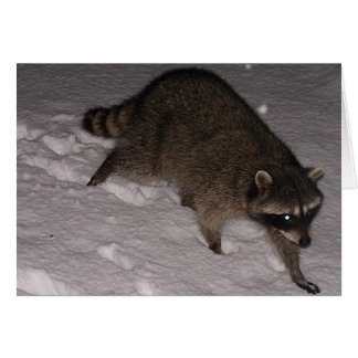 Raccoon Visitor In The Snow Card