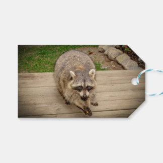 Raccoon with a chip gift tags