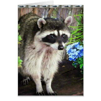 Raccoon With Blue Flowers And Feathers Card
