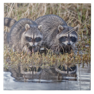 Raccoons Ceramic Tile