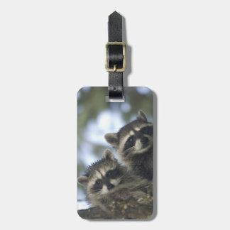 Raccoons Procyon Lotor) of Fish Lake, Central Bag Tags