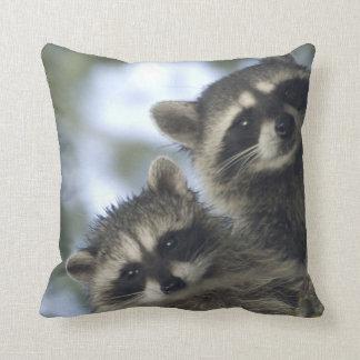 Raccoons Procyon Lotor) of Fish Lake, Central Cushion
