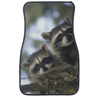 Raccoons Procyon Lotor) of Fish Lake, Central Floor Mat