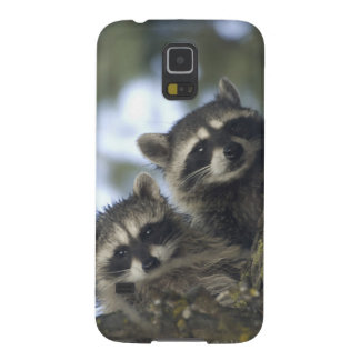 Raccoons Procyon Lotor) of Fish Lake, Central Galaxy S5 Cover