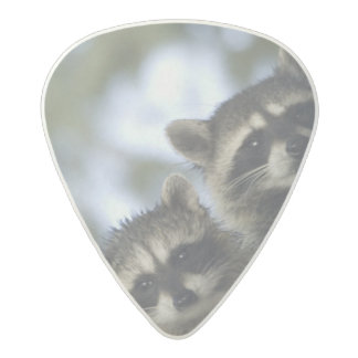 Raccoons Procyon Lotor) of Fish Lake, Central Acetal Guitar Pick