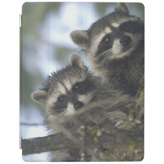 Raccoons Procyon Lotor) of Fish Lake, Central iPad Cover