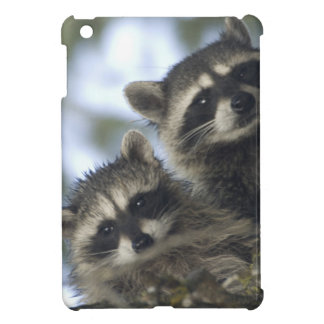 Raccoons Procyon Lotor) of Fish Lake, Central Cover For The iPad Mini