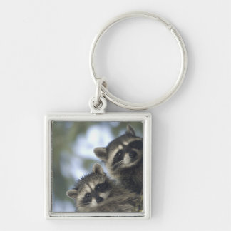 Raccoons Procyon Lotor of Fish Lake Central Key Chain