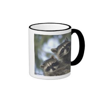 Raccoons Procyon Lotor) of Fish Lake, Central Coffee Mug