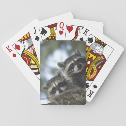 Raccoons Procyon Lotor) of Fish Lake, Central Playing Cards