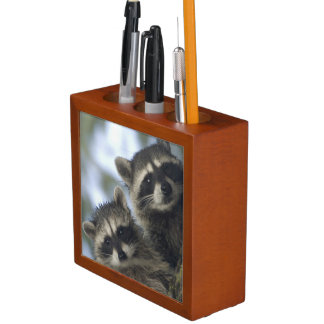 Raccoons Procyon Lotor) of Fish Lake, Central Pencil Holder