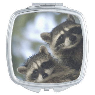 Raccoons Procyon Lotor) of Fish Lake, Central Compact Mirror