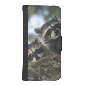 Raccoons Procyon Lotor) of Fish Lake, Central iPhone 5 Wallets