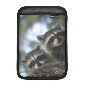 Raccoons Procyon Lotor) of Fish Lake, Central Sleeve For iPad Mini