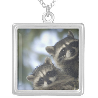 Raccoons Procyon Lotor) of Fish Lake, Central Square Pendant Necklace