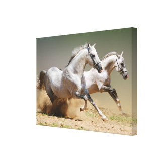 Race the Wind Horses Stretched Canvas Print