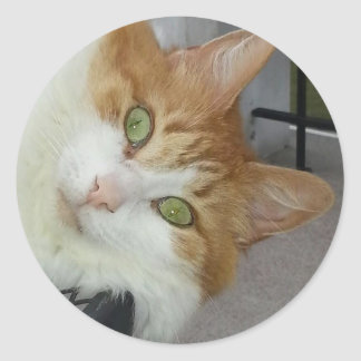 Rachel the Rescue Kitty Classic Round Sticker