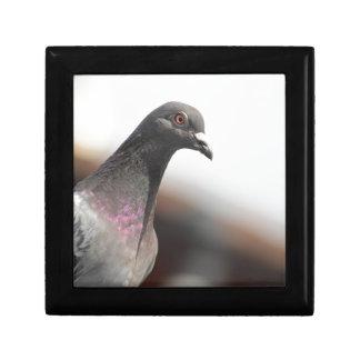 Racing pigeon gift box