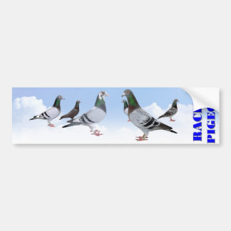 Racing Pigeons Bumper Sticker