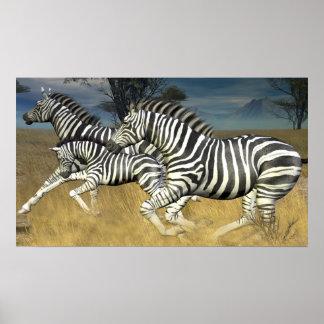 Racing Stripes - Herd of Zebra Poster print