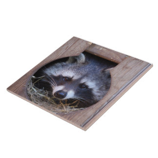 Racoon by Jean Louis Glineur Large Square Tile