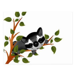 Racoon in a Tree Postcard