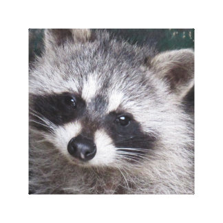 Racoon profile canvas print