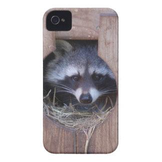 RACOON RACCOON iPhone 4 CASES