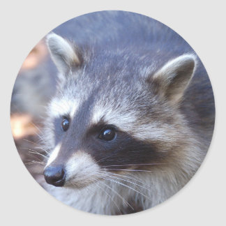 RACOON RACCOON photo: Jean Louis Glineur Classic Round Sticker