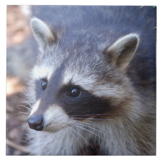 RACOON RACCOON - photo: Jean Louis Glineur Large Square Tile
