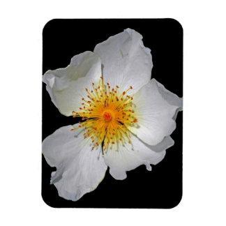 Radiance Delicate White Blossom Vinyl Magnet