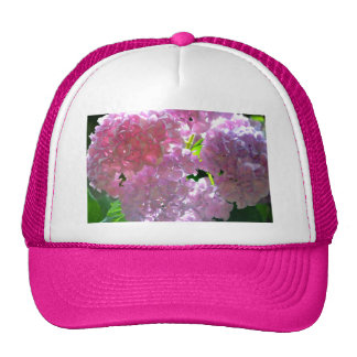 Radiant Pink hydrangeas Cap