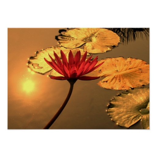 Radiant Water Lily with the Sun Reflecting Posters