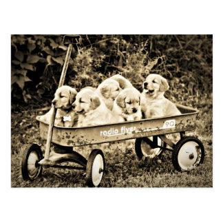 Radio Flyer Red Wagon Full of Puppies Postcard