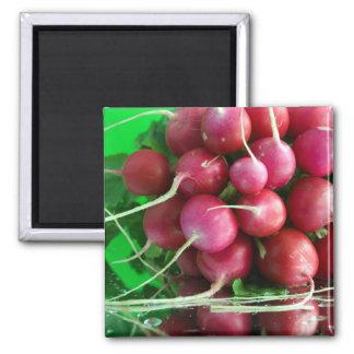 Radish Square Magnet