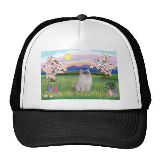 Ragdoll Cat (Blue Point) - Blossoms Cap