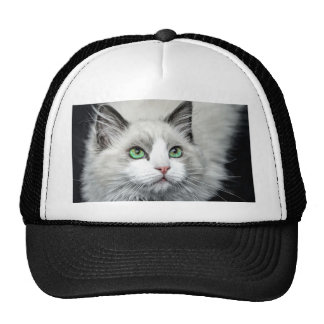 Ragdoll Cat. Cap