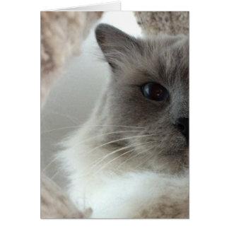 Ragdoll Cat, Card