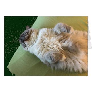 Ragdoll Cat Couch Potato Card