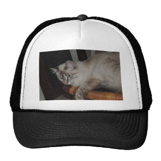 Ragdoll Cat Kitten Original Photo Design Cap