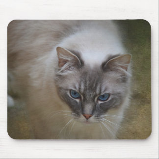 Ragdoll Cat Mousemat