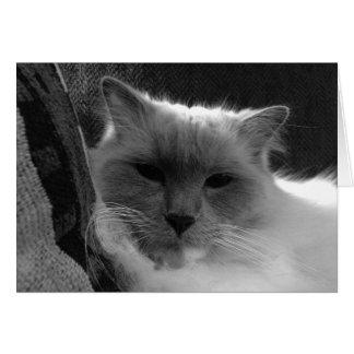 Ragdoll Cat - noir, Card