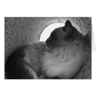 Ragdoll Cat Profile - Noir, card