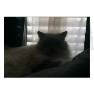 Ragdoll Cat – Watcher at Dusk Card