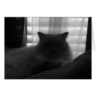 Ragdoll Cat – Watcher at Dusk - Noir Card